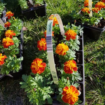 Gėlės Hospisui